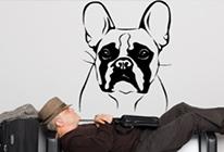 Samolepky na zeď - Pes francouzský buldoček
